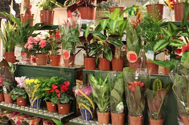 Galerias Alto da Barra Florista Foto 3